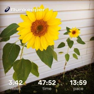 Run streak - day 12